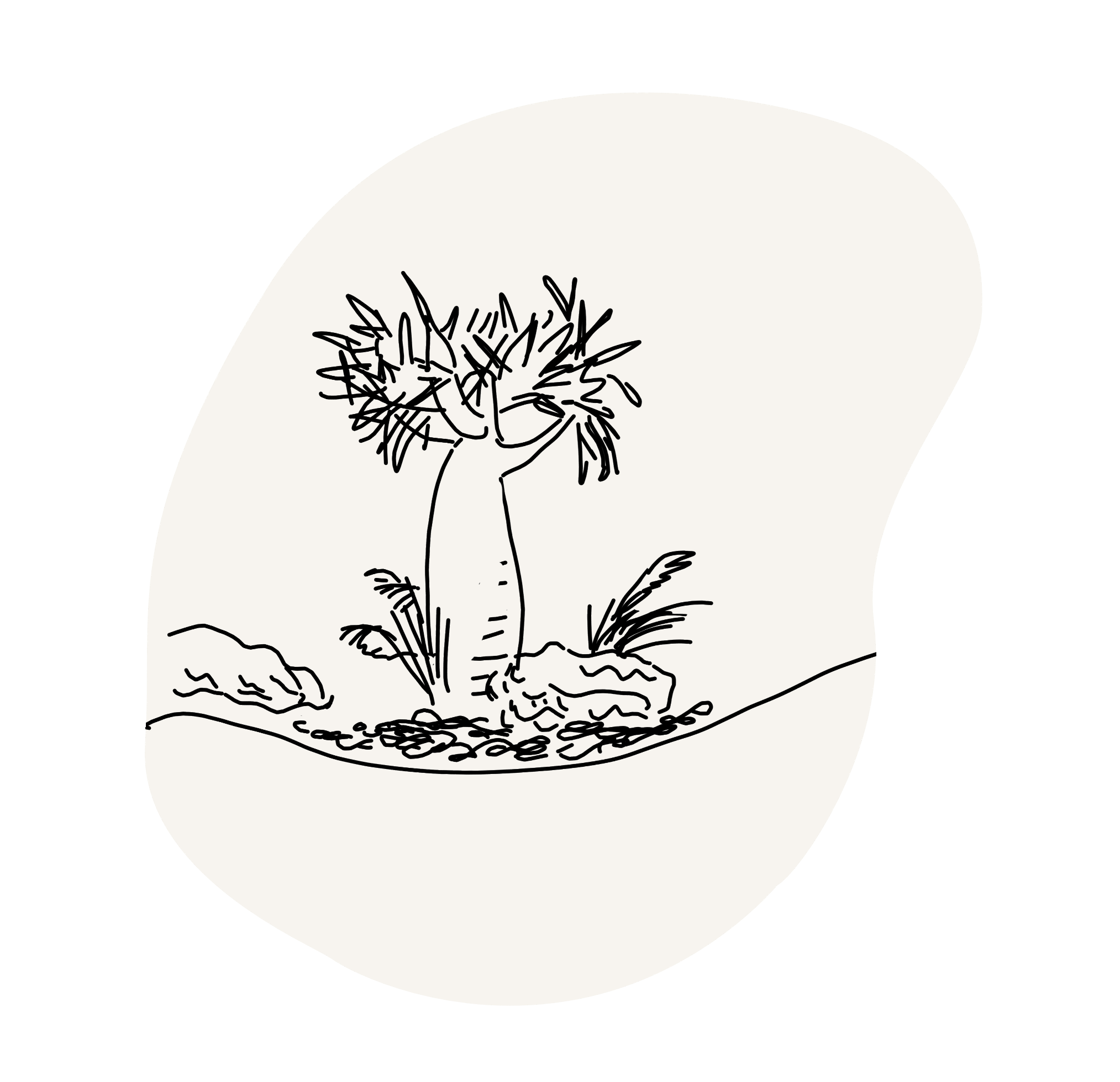Black line drawing of garden on white